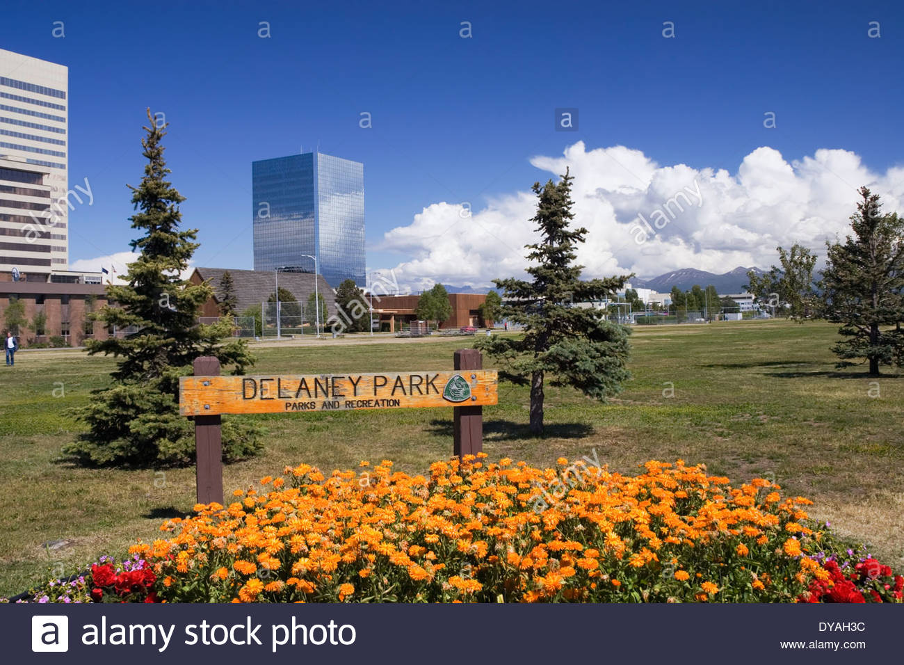 Historic City Hall Anchorage, View Of Downtown Anchorage @ Delaney Park Sc Ak Summer Stock Photo ...