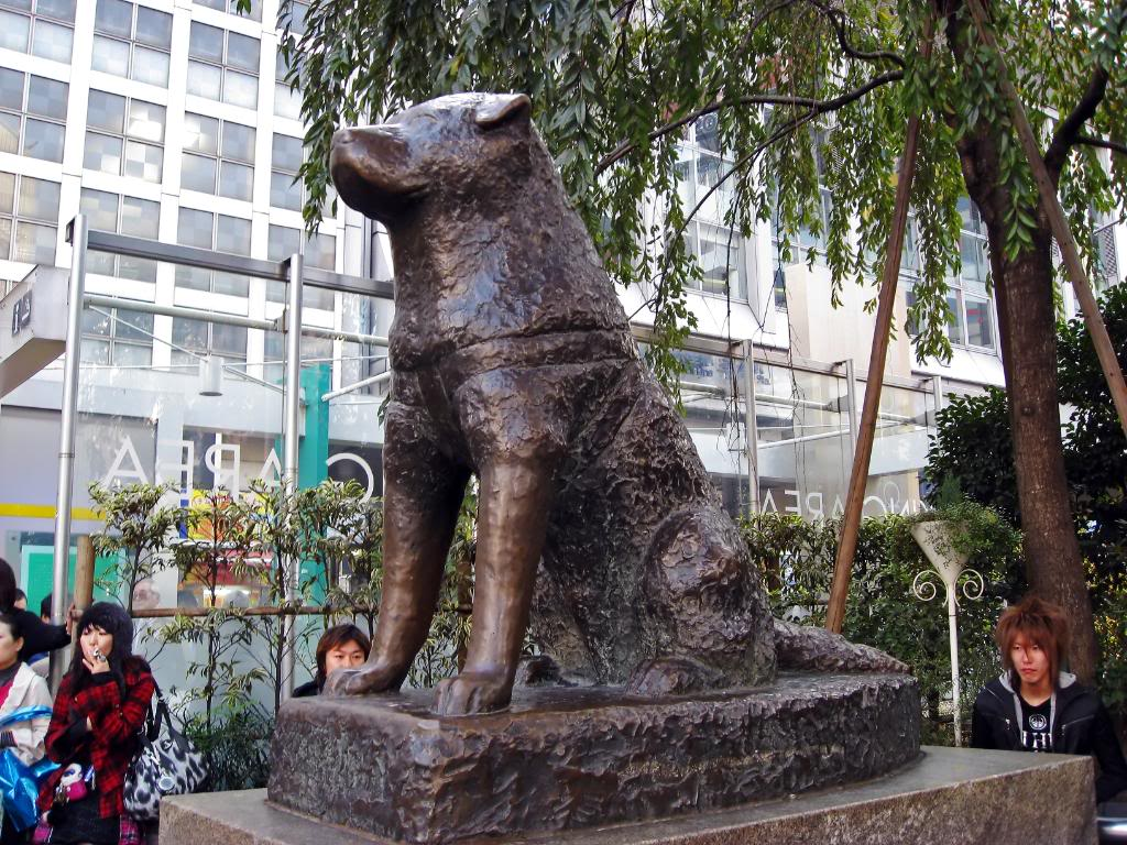 Ikebukuro Earthquake Hall Tokyo, A DOG WAITED FOR 10 YEARS FOR HIS DECEASED MASTER – A HEART ...