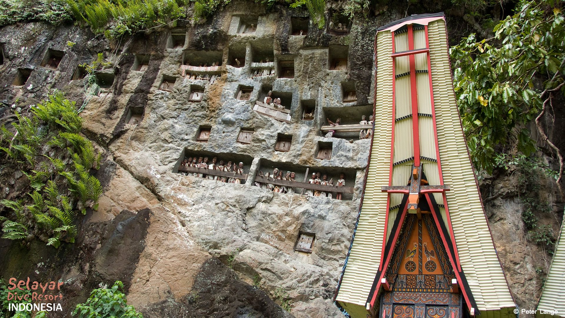 indonesian value and ideology of toraja Indonesia money and currency guide 5 out of 5 ( 83 ) indonesia currency is called rupiah (idr symbol rp), the largest banknote is rp 100,000, which may only about us$10 but is still inconveniently large for most purchases.