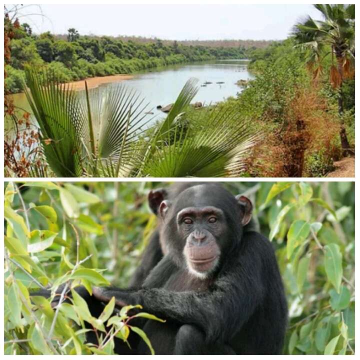 Kiang West National Park West Africa, Kiang West National Park - Poontoe