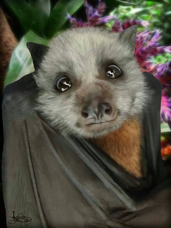 Kidike Flying Fox Sanctuary Pemba, 198 best Bats images on Pinterest | Baby bats, Nature and Baby animals