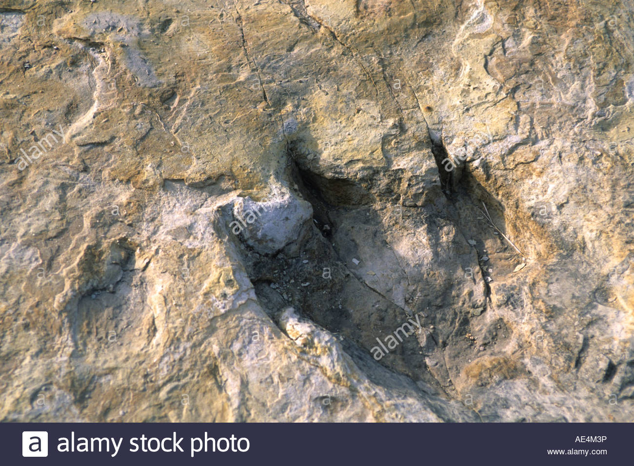 Kiowa and Rita Blanca National Grasslands Northeastern New Mexico, Dinosaur Footprint Stock Photos & Dinosaur Footprint Stock Images ...