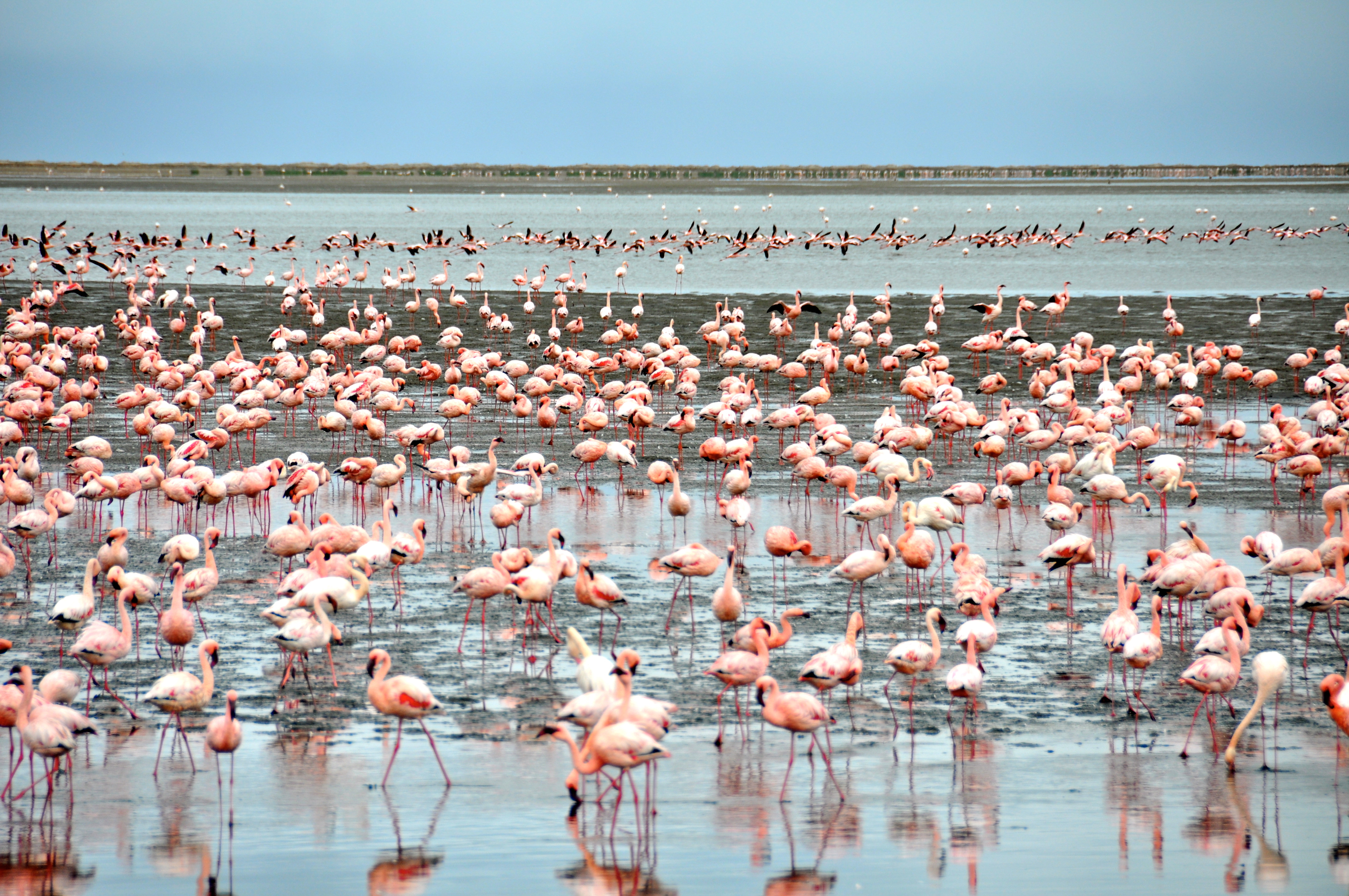 Lagoon Walvis Bay, Walvis Bay – Flamingos, Seals and Sand… | Lass O'Luanda