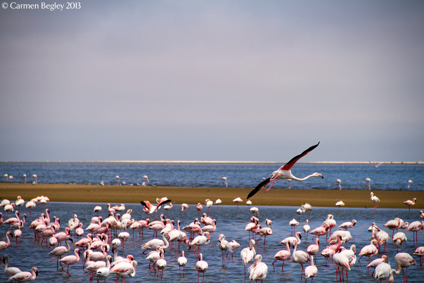 Lagoon Walvis Bay, A blush of colour at the Walvis Bay lagoon - more about the ...