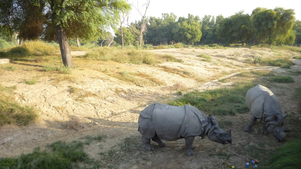 Lal Suhanra National Park Lal Suhanra National Park, Panoramio - Photo of Rhinos at Lal Suhanra National Park