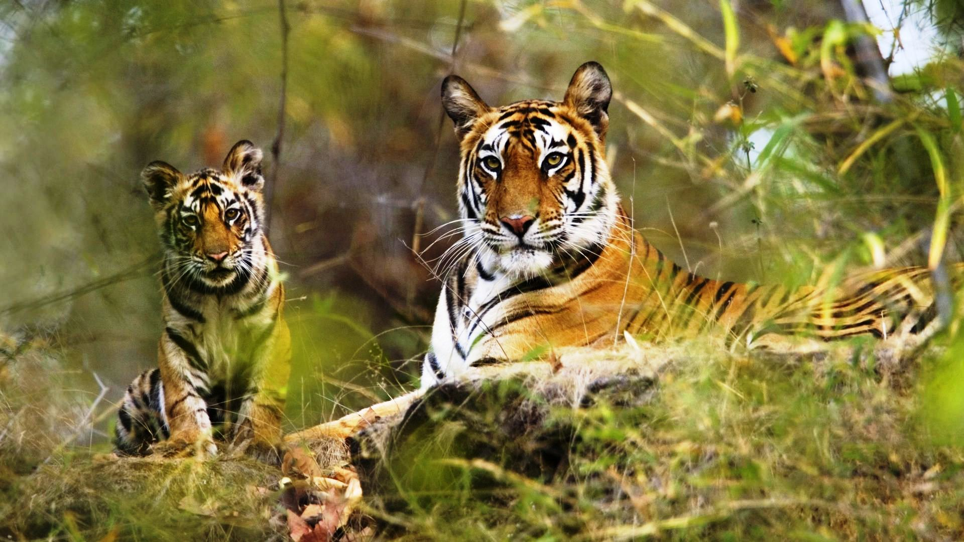 Madhav National Park Gwalior, Bask in the wilderness of jungles with these top 10 safaris in India