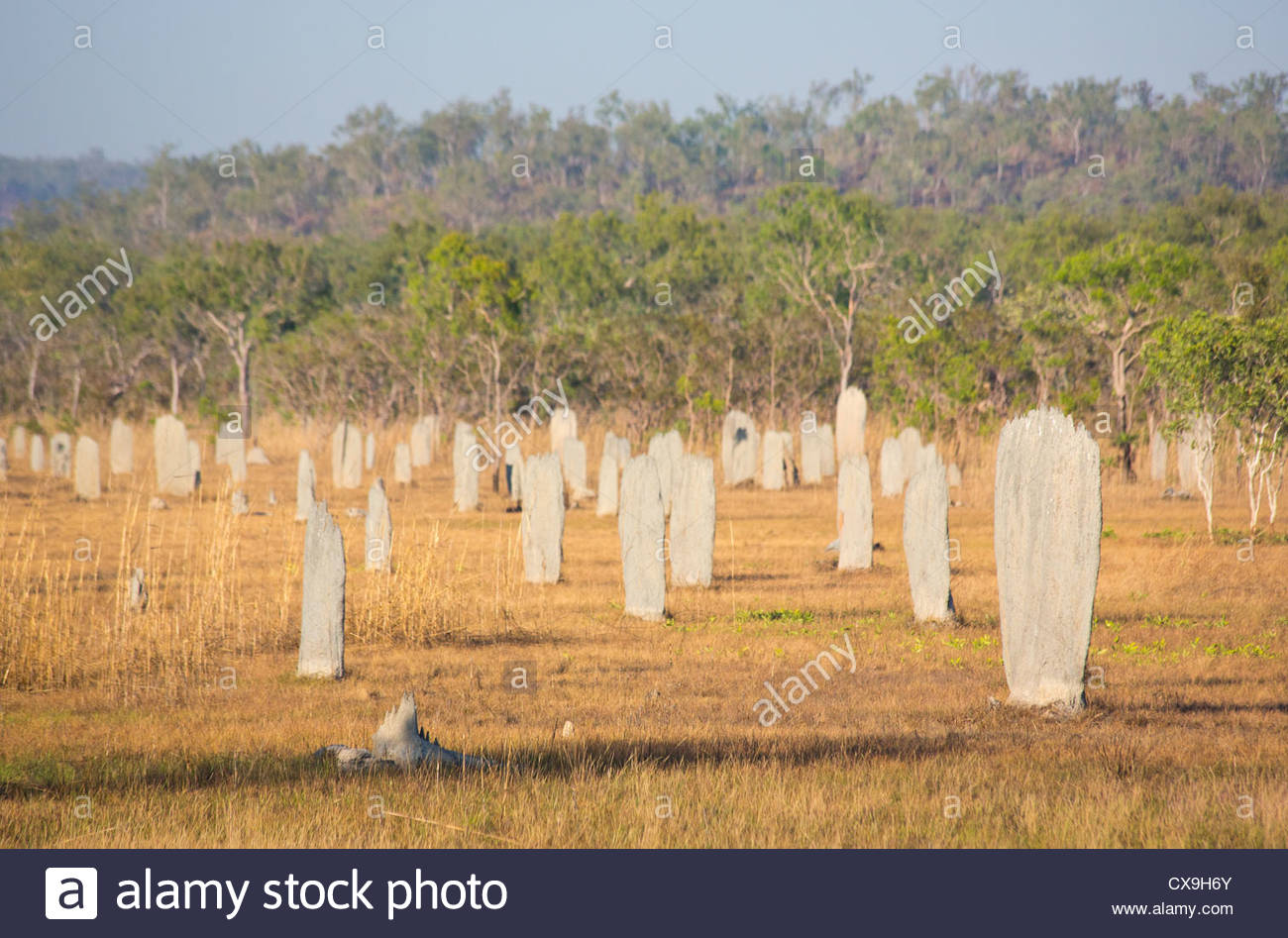 Magnetic Termite Mounds Litchfield National Park, Magnetic termite mounds, Litchfield National Park, Northern ...
