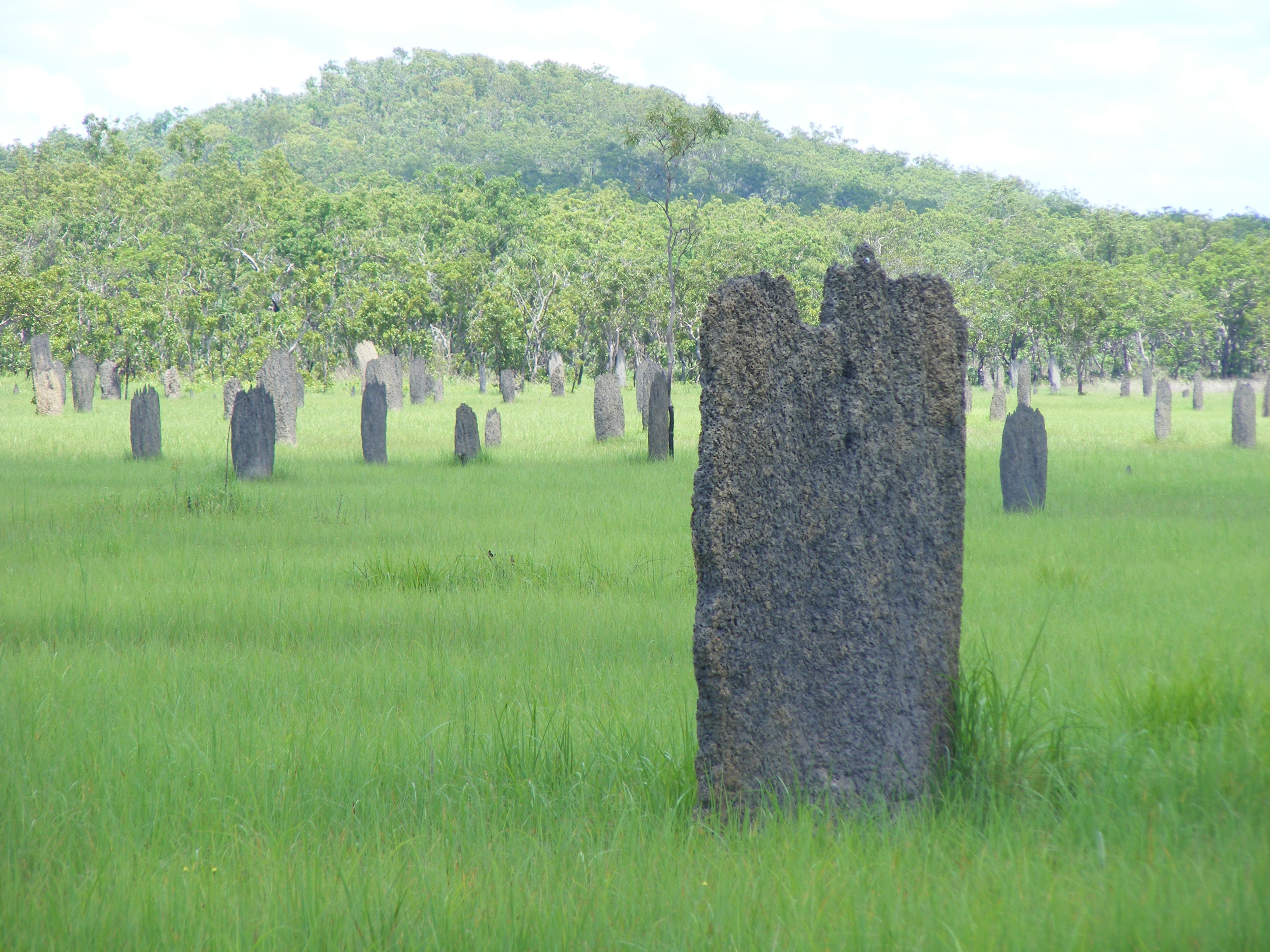 Magnetic Termite Mounds Litchfield National Park, Magnetic Termite mounds Litchfield NT | Robbie's Travel Blog