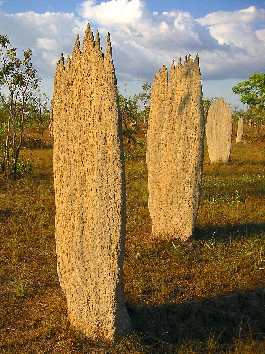 Magnetic Termite Mounds Litchfield National Park, Australia - attractions and landmarks | Wondermondo