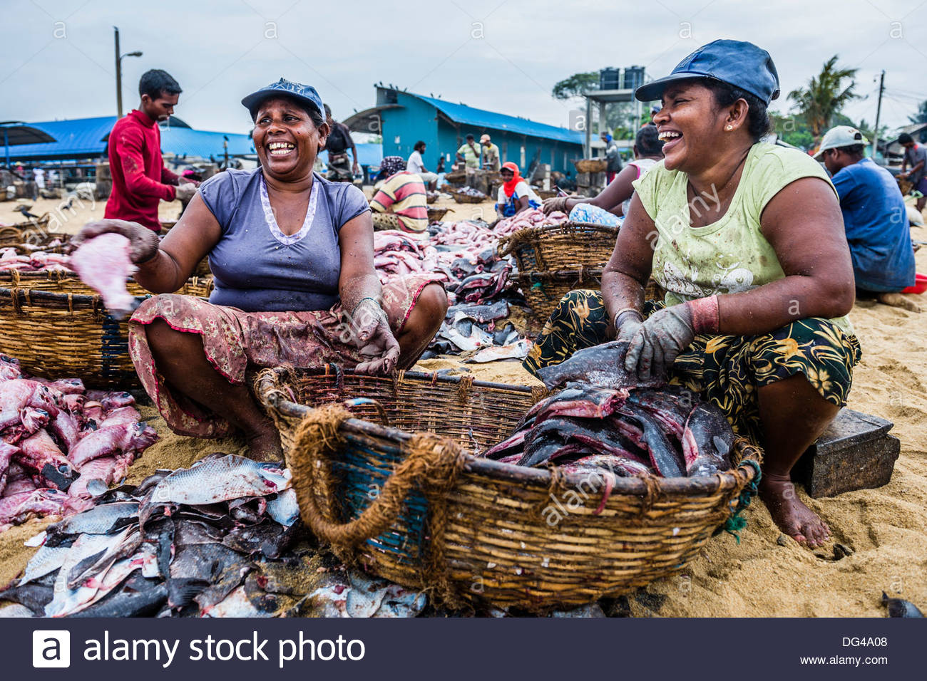 Main Fish Market Negombo, Negombo fish market (Lellama fish market), women gutting fish ...