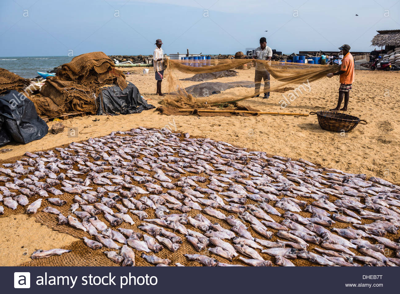 Main Fish Market Negombo, Fishermen drying out fishing nets in Negombo fish market (Lellama ...