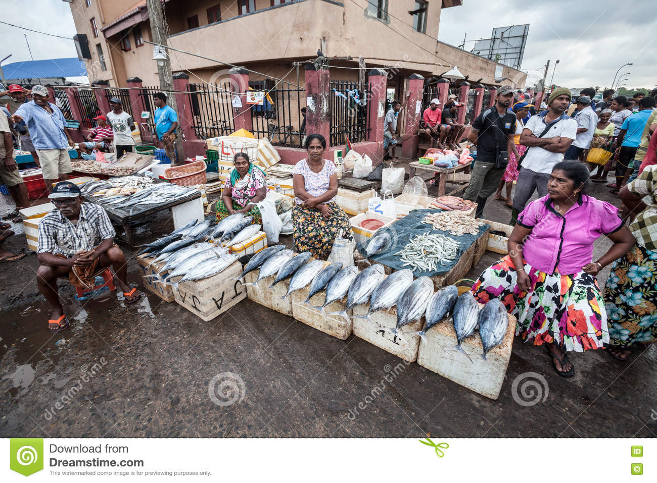 Main Fish Market Negombo, Fish Market. Negombo, Sri Lanka Editorial Stock Image - Image ...