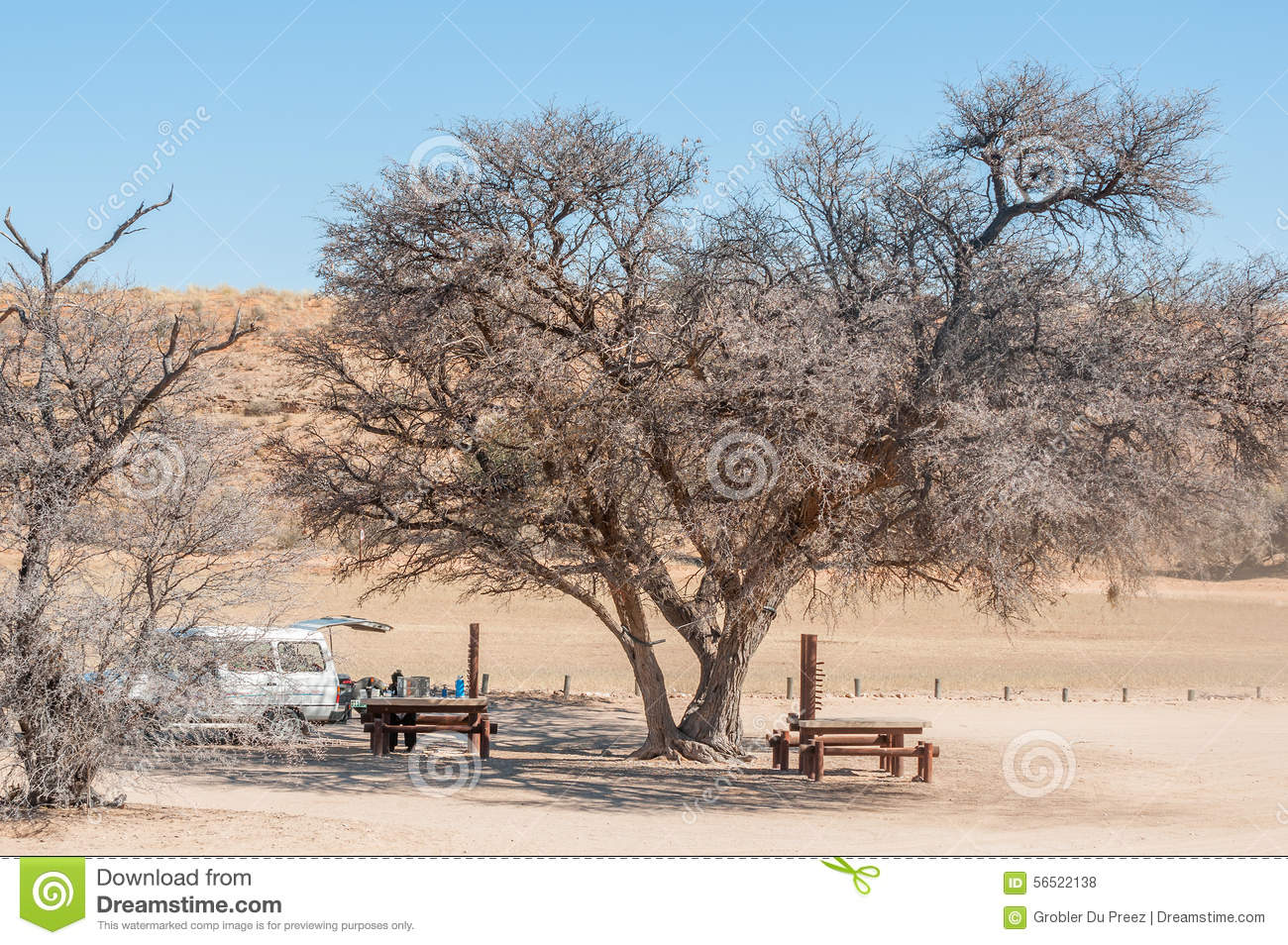 Mooiplaas Picnic Spot Kruger National Park, Camel Thorn Tree At The Kamqua Picnic Site Editorial Stock Photo ...