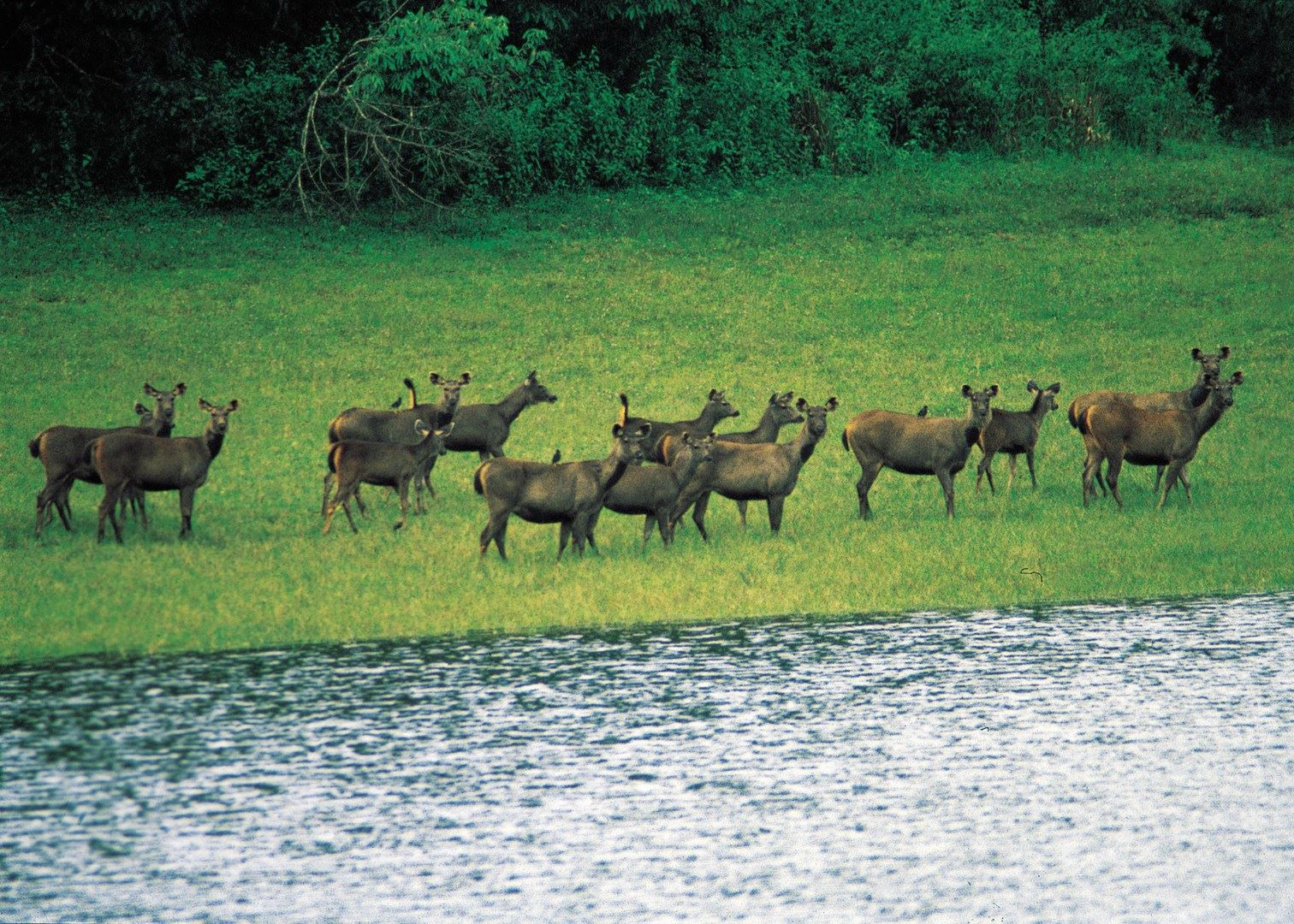 National park pictures in india Sanjay Gandhi National Park - Wikipedia
