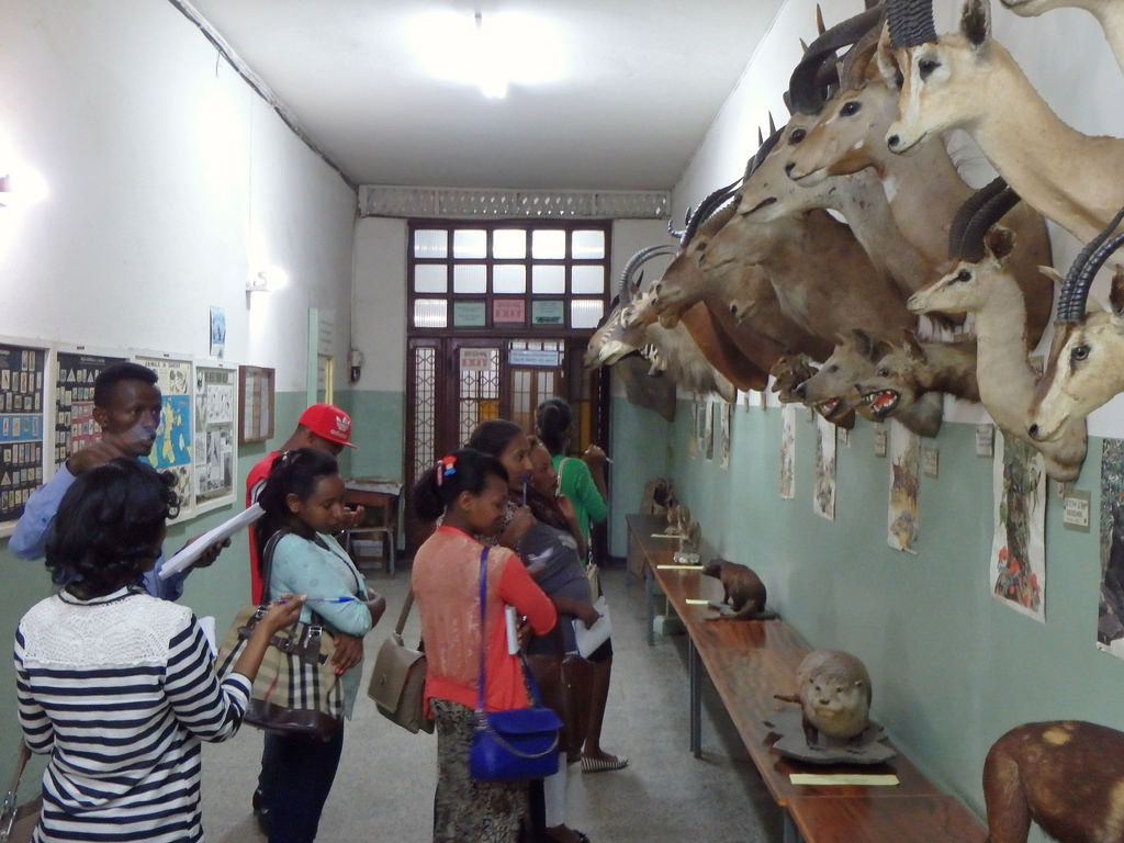Natural History Museum Addis Ababa, The World's newest photos of taxidermy and zoological - Flickr ...