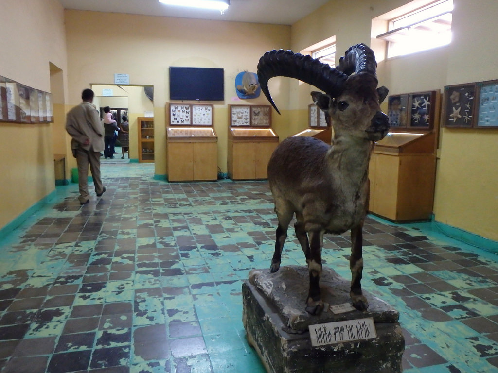 Natural History Museum Addis Ababa, The World's Best Photos of taxidermy and zoological - Flickr Hive Mind