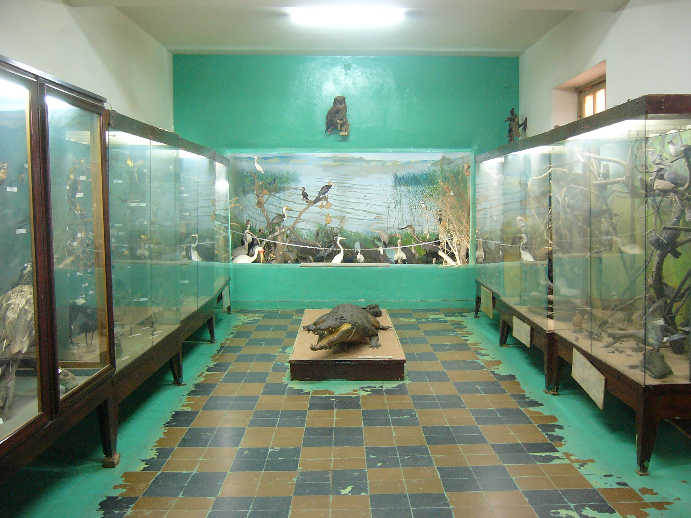 Natural History Museum Addis Ababa, Climatic and Environmental Challenges: Learning from the Horn of ...