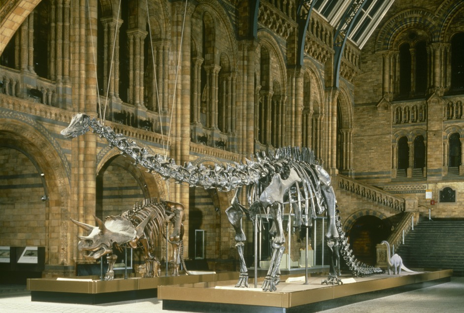 Natural History Museum London, Natural History Museum London | Nearby hotels, shops and ...
