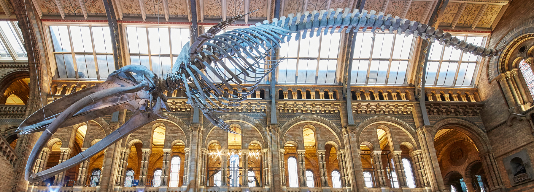 Natural History Museum London, london's natural history museum unveils blue whale skeleton