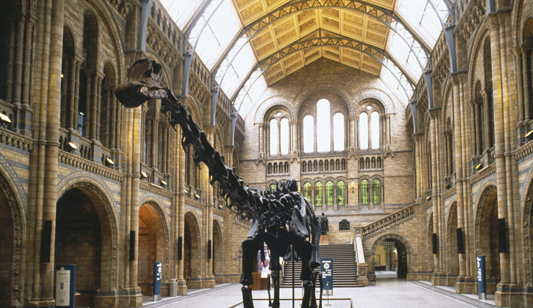 Natural History Museum London, History and architecture | Natural History Museum