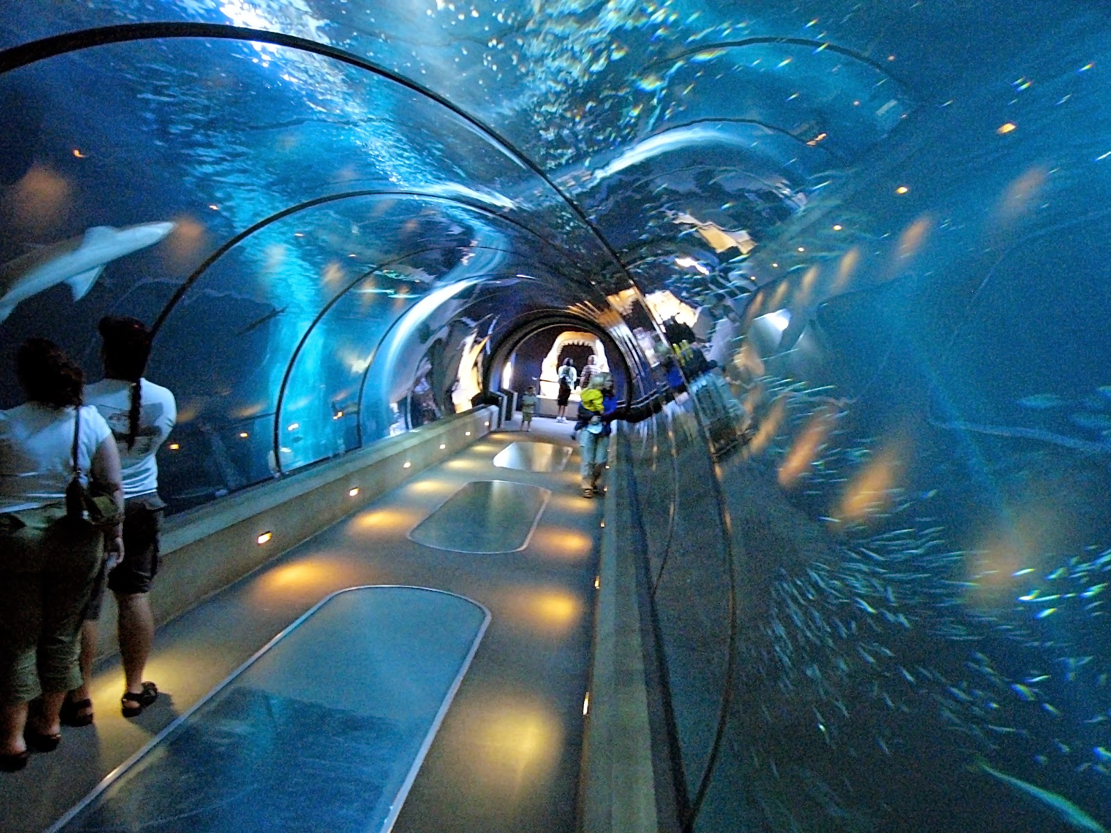 New York Hall of Science New York City, 15 Best Free Things To Do In New York City - Kid 101