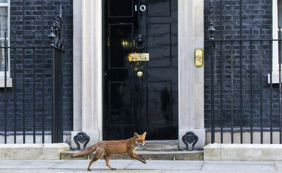 No 10 Downing Street London, An Unexpected Wilderness Cam At Britain's No. 10 Downing St. : The ...