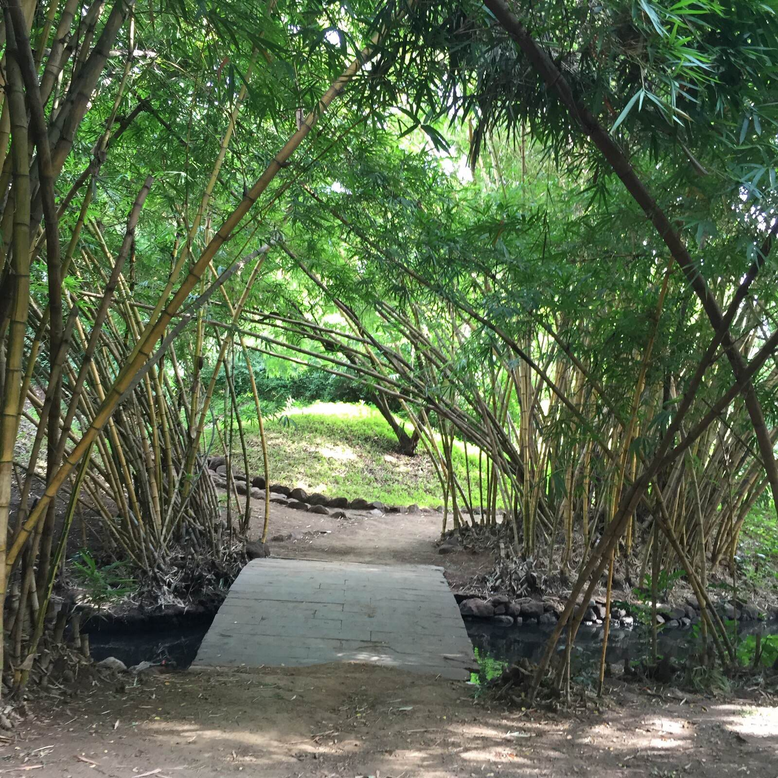 Osho Teerth Gardens Pune, the foodietrails: A triumph of both nature and man: Osho teerth park