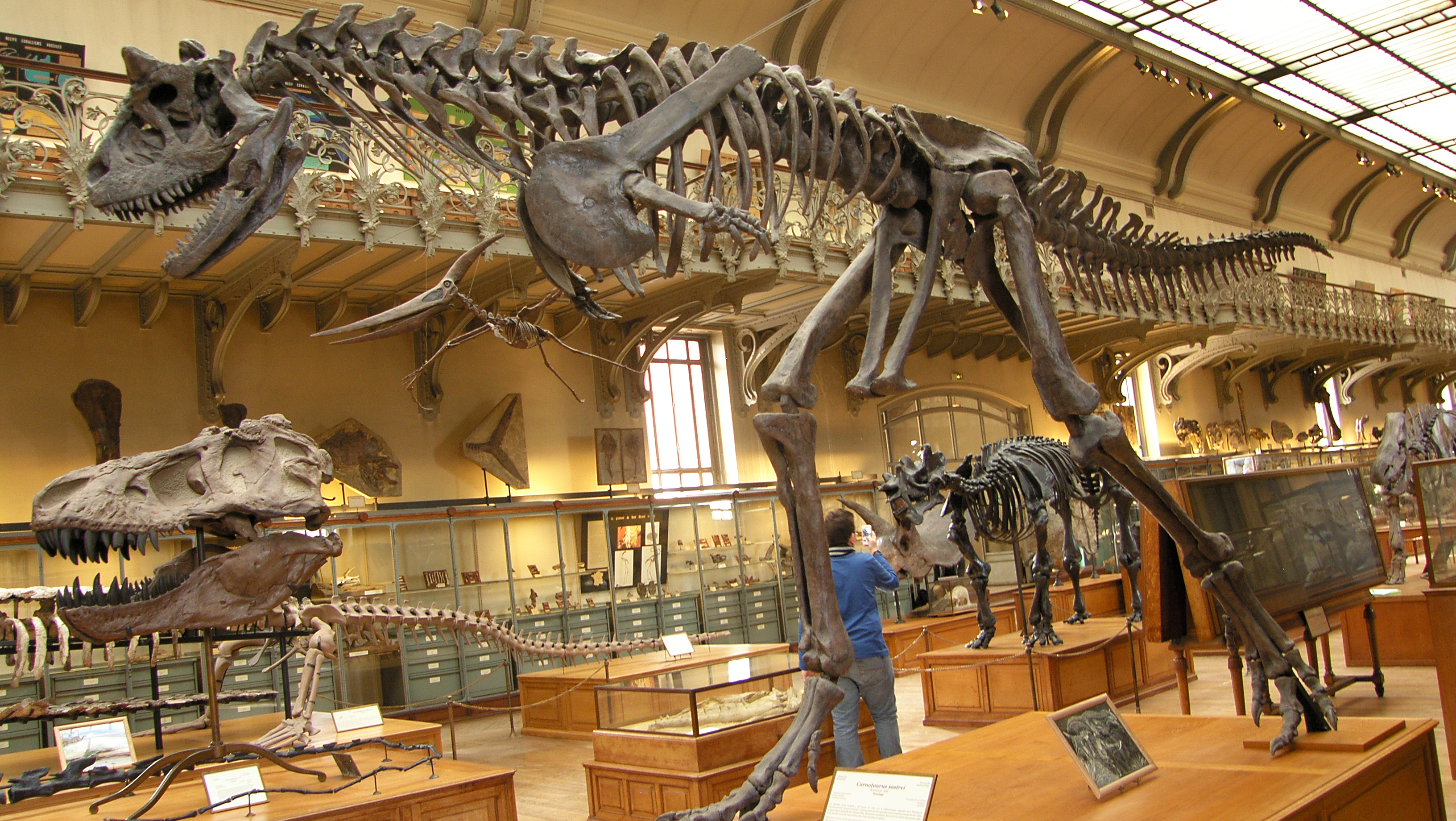Palais Galliera, Musée de la Mode Paris, Carnotaurus and T-rex at the Paleontology Gallery, Museum National ...