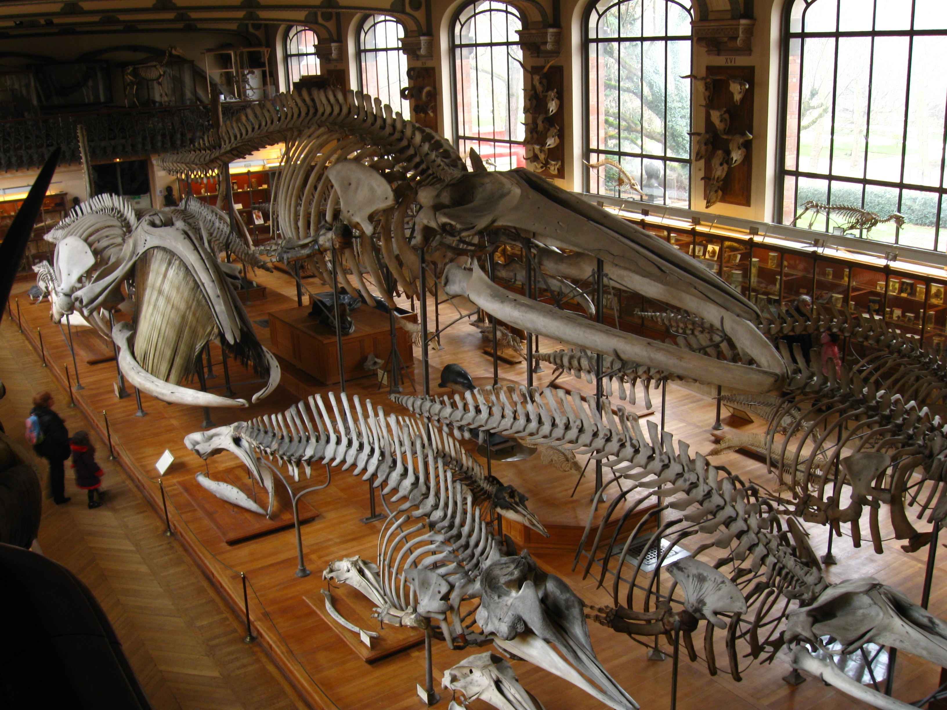 Palais Galliera, Musée de la Mode Paris, The Natural History Museum | CheckYourParis