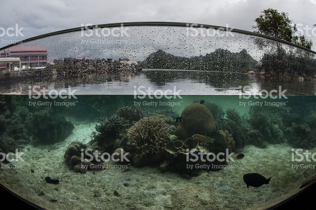 Palau Aquarium Koror, Palau Aquarium stock photo 531906557 | iStock
