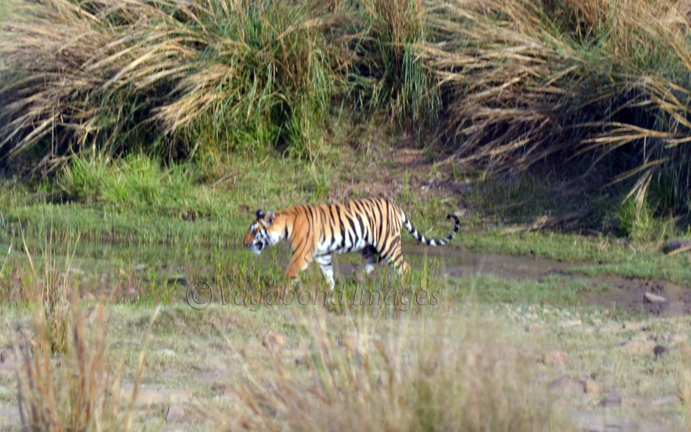 which tiger reserve in india