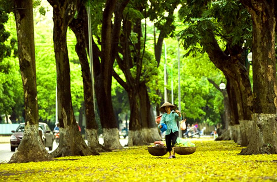 Phan Dinh Phung Street Hanoi, Recommended things to do in Hanoi