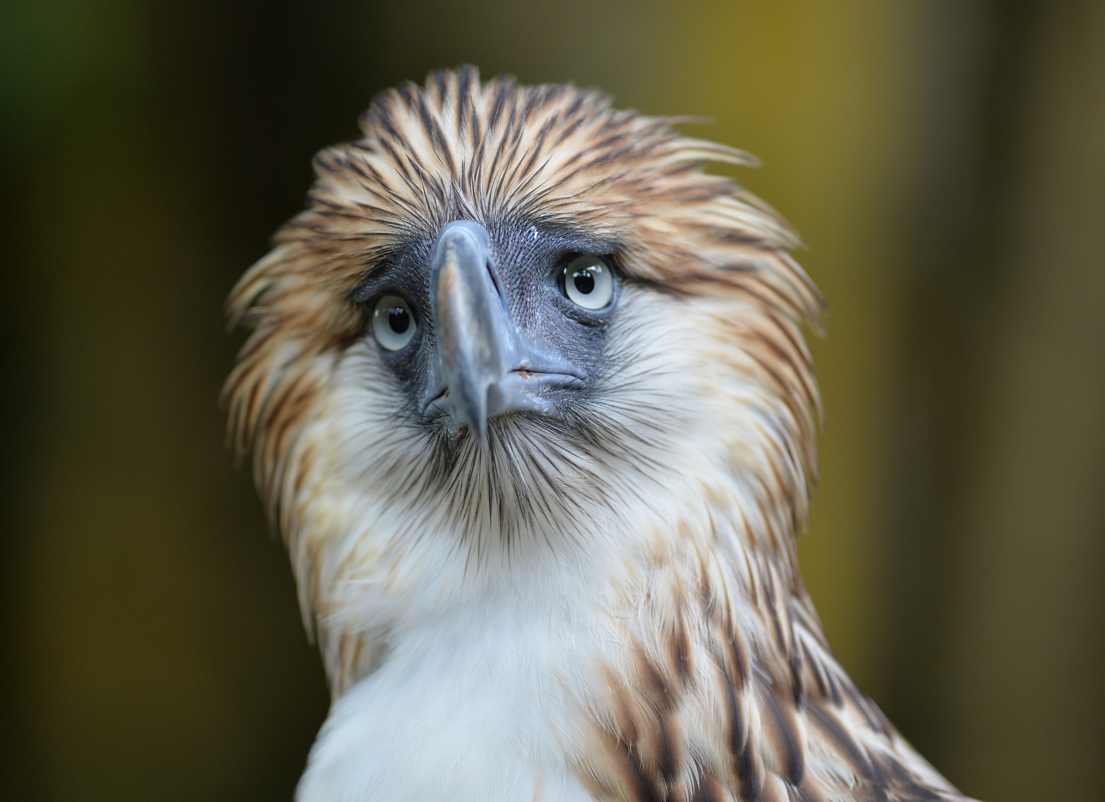 Philippine Eagle Center Southern Mindanao, Sanctuary offers hope for endangered Philippine eagle