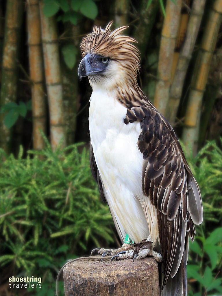 Philippine Eagle Center Southern Mindanao, Gone Birdwatching – The Shoestring Diaries