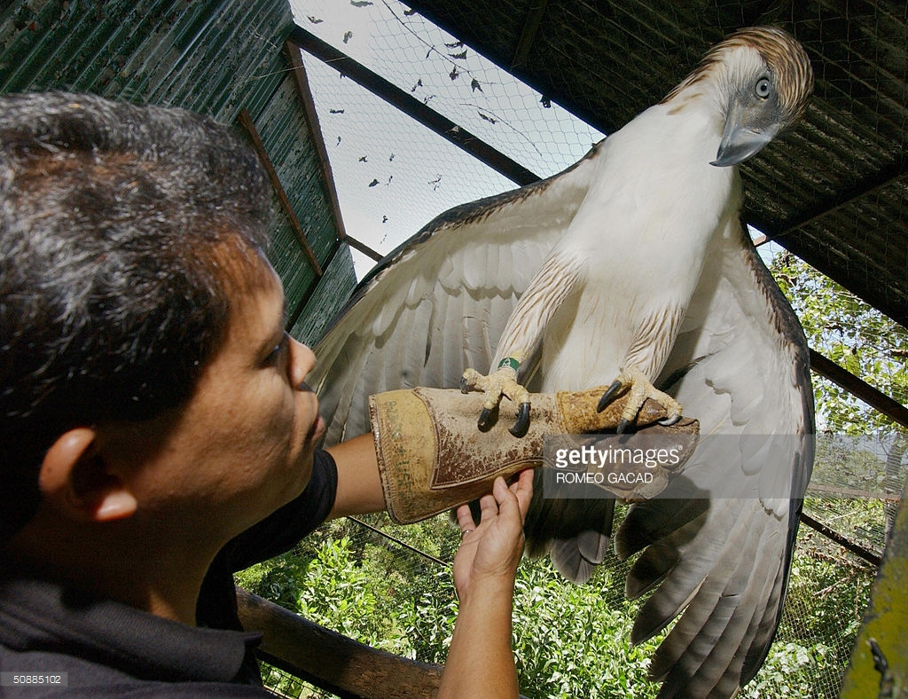 Philippine Eagle Center Southern Mindanao, Pag-Asa, (Filipino for hope) the 12-year Pictures | Getty Images