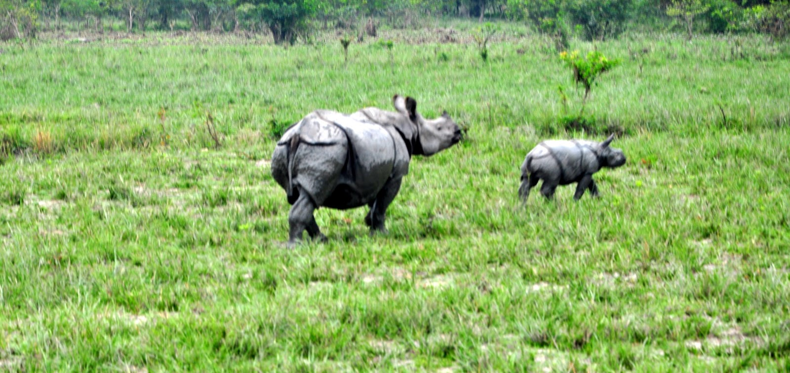 Pobitora Wildlife Sanctuary Guwahati, United 21 Grassland Resort, Kaziranga - Official Blog: Attraction ...