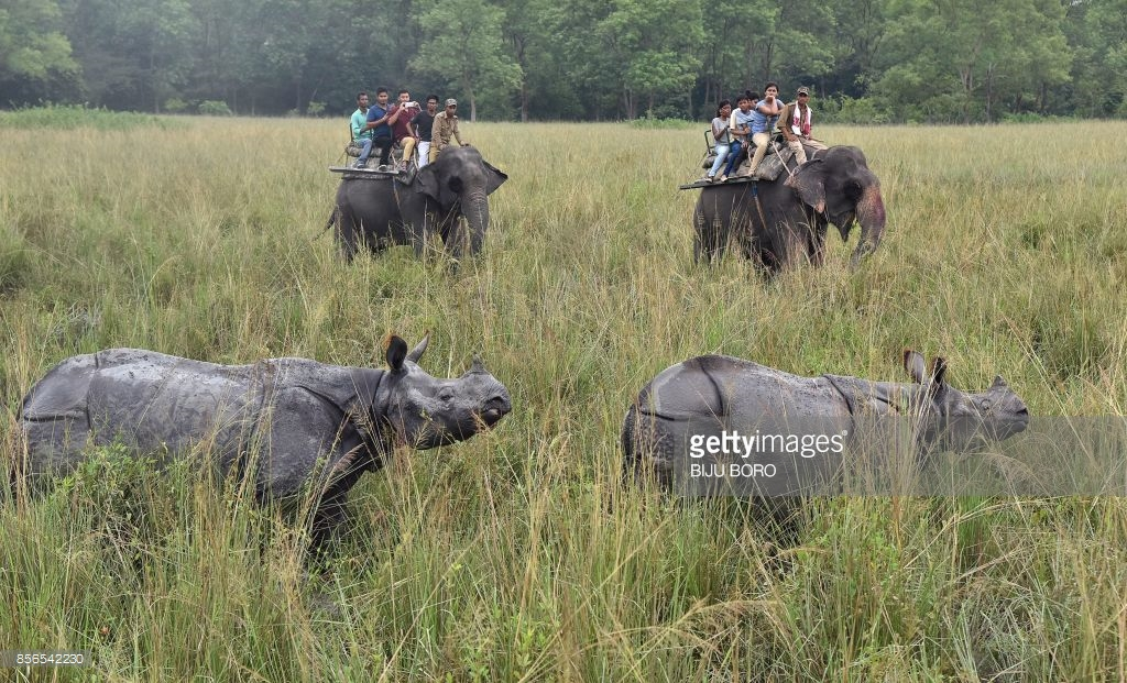 Pobitora Wildlife Sanctuary Guwahati, TOPSHOT - Tourists riding on elephants watch Indian one horn ...