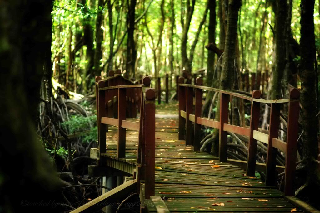 Pulau Selirong Recreational Park Temburong District, Brunei Tourism and Travel Information