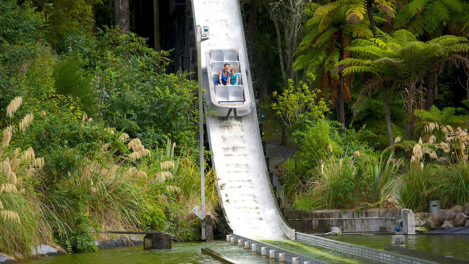 Rainbow Springs Rotorua, Attraction Pictures: View Images of Rainbow Springs Kiwi Wildlife Park