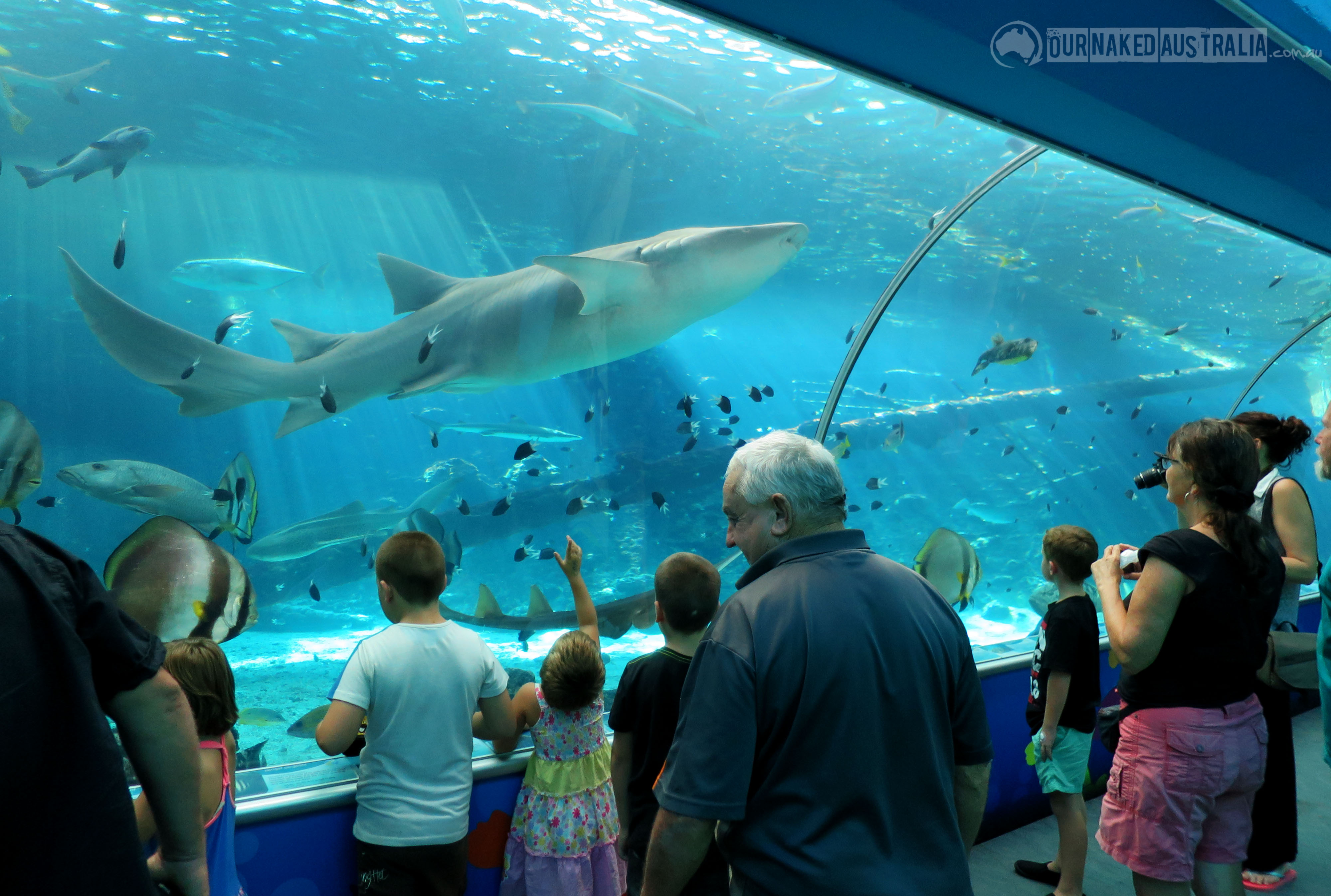 Reef HQ Aquarium Townsville, Attraction : Reef HQ Great Barrier Reef Aquarium | Our Naked Australia