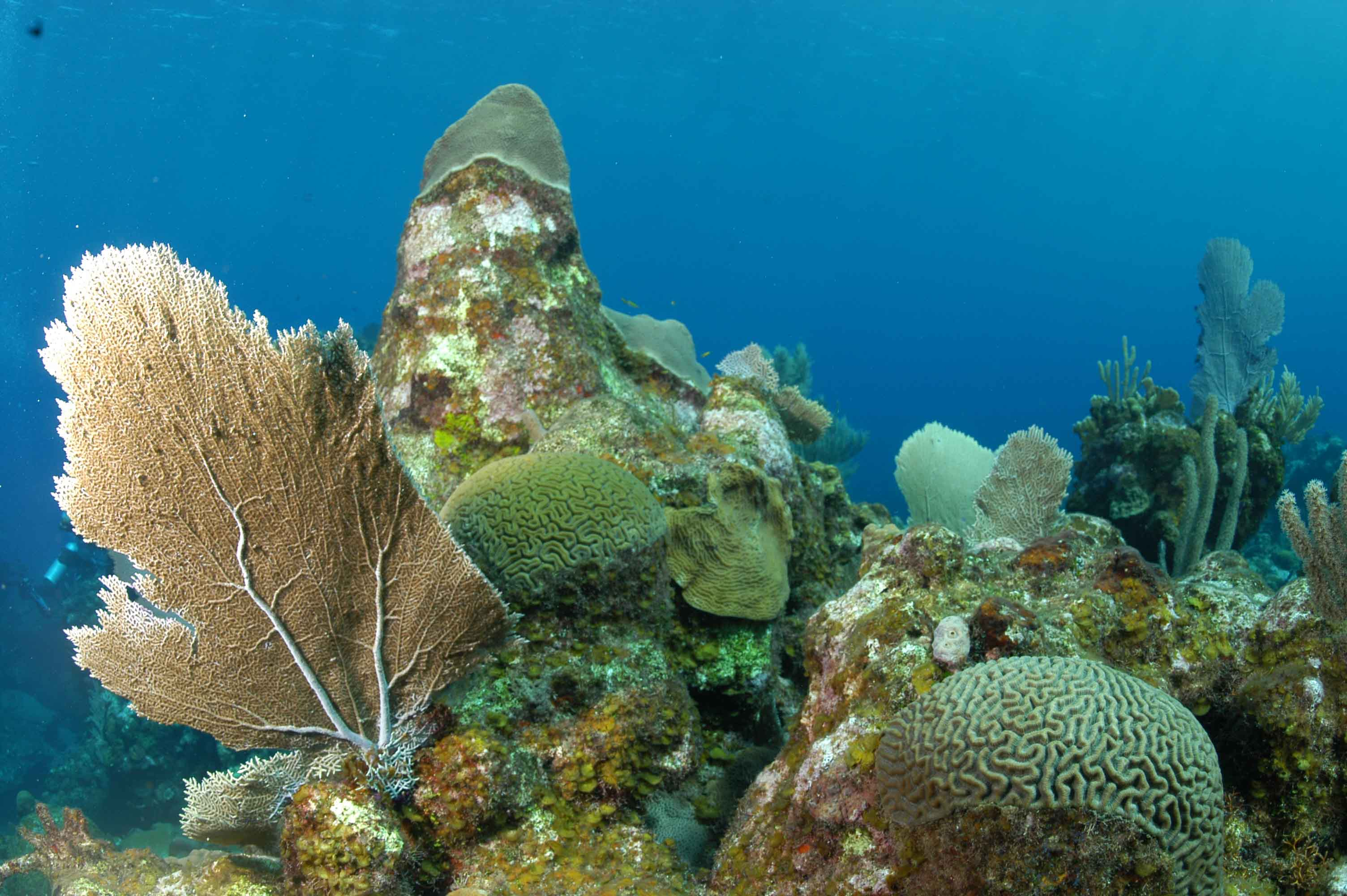 Roatán Marine Park West End, Laurence Ourac » Satisfy Your Travel Craving in Roatan