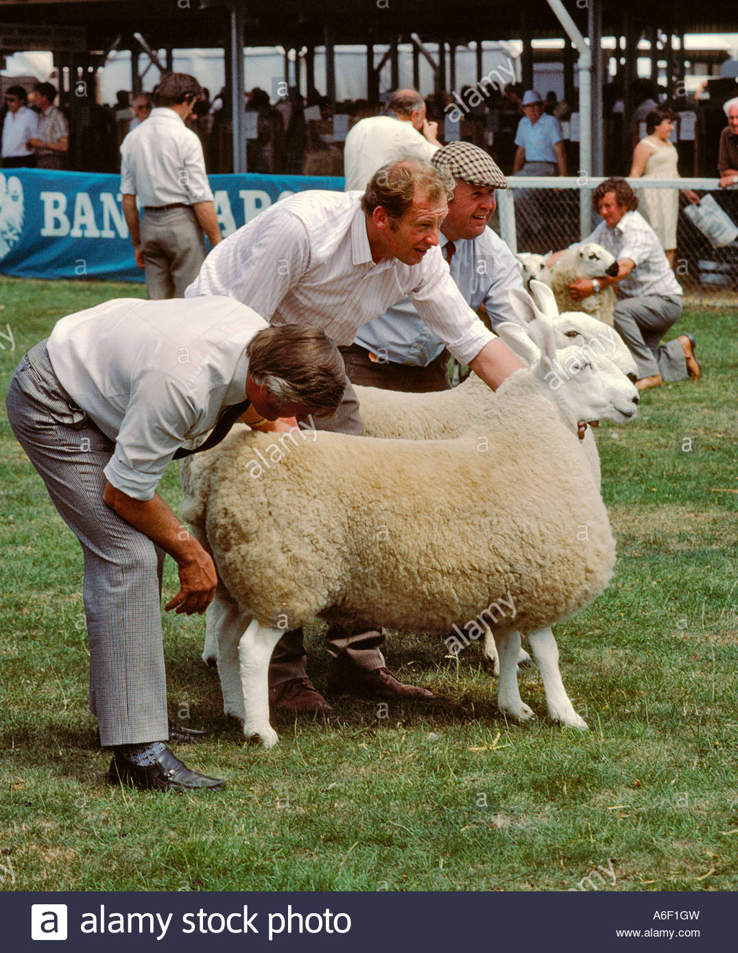 Royal Welsh Show Mid-Wales, FARMERS DISPLAYING SHEEP AT AN AGRICULTURAL SHOW THE ROYAL WELSH ...