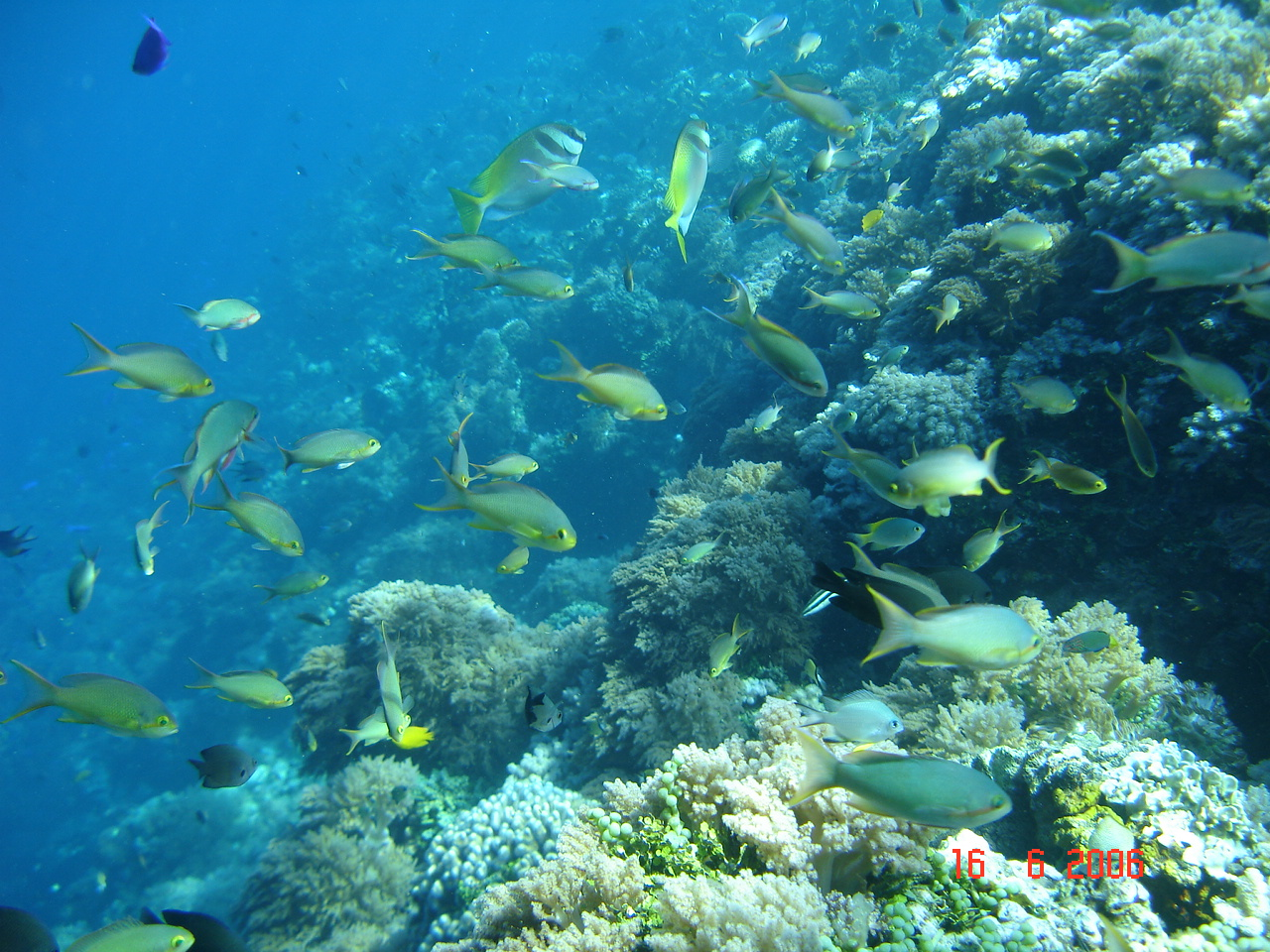 Sagay Marine Reserve Sagay, Exotic Tropical Island Life, Negros Occidental | Just another ...