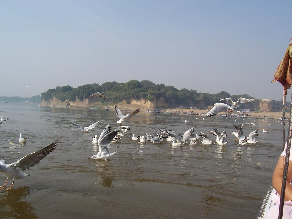 Sangam Allahabad, Triveni Sangam Allahabad - What to Know Before You Go (with Photos ...
