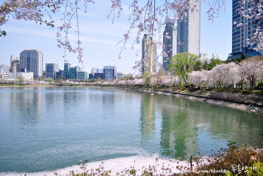 Seokchon Lake Park Seoul, Best Places to view Cherry Blossoms in Seoul – Seoul Much More