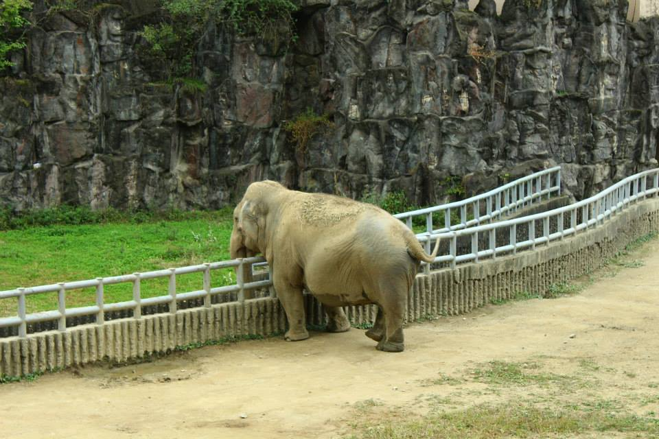 Seoul Zoo Seoul Grand Park, A Day at Seoul Grand Park - Meeting Seoul's seniors and little ...