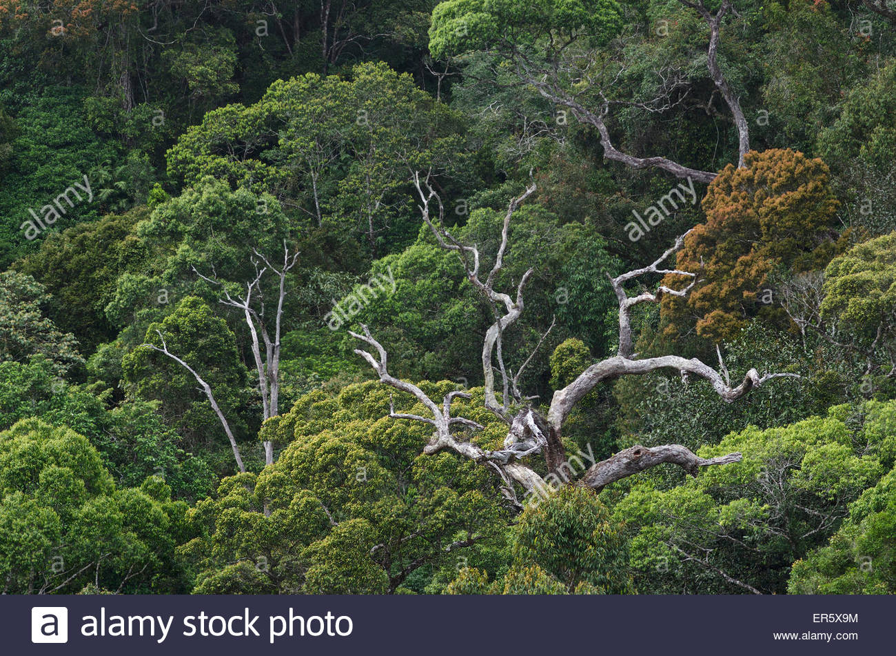 Sinharaja Forest Reserve Sinharaja Forest Reserve, View from Sinharaja Forest Reserve Lodge into the jungle in the ...
