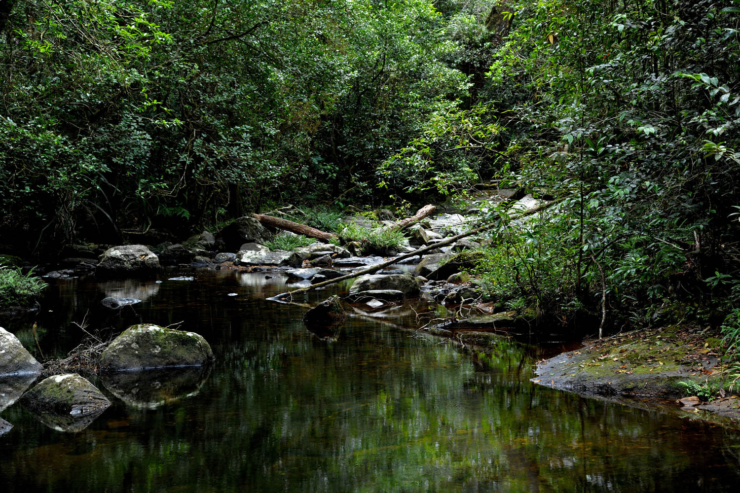 Sinharaja Forest Reserve Sinharaja Forest Reserve, Sinharaja Forest Reserve | Holidays in Sri Lanka | Tour Packages