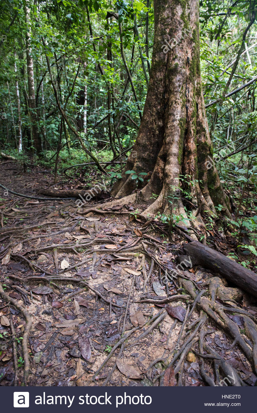 Sinharaja Forest Reserve Sinharaja Forest Reserve, Sinharaja Forest Reserve, Sri Lanka Stock Photo, Royalty Free ...