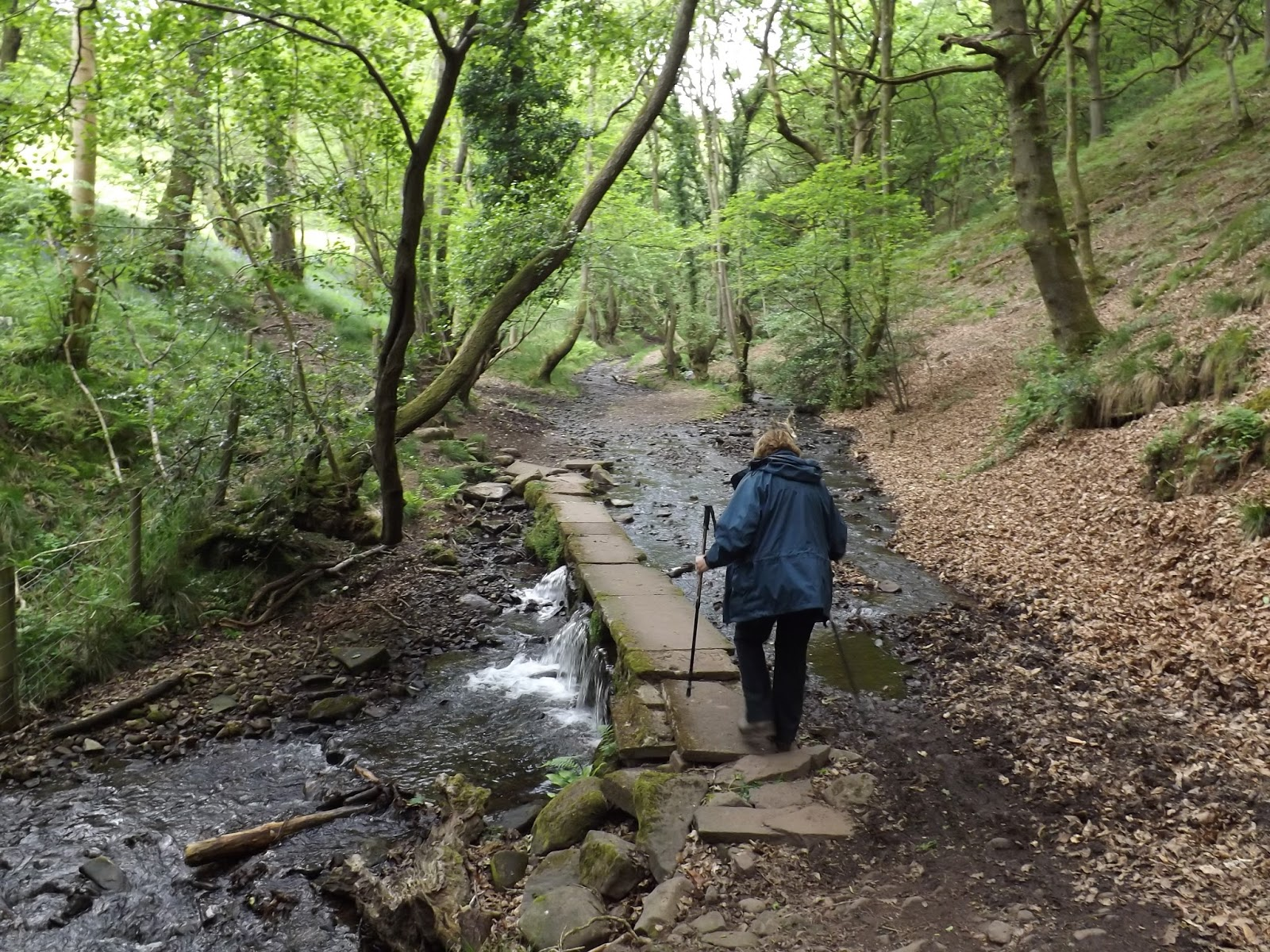 St. Mary's Vale South Wales, Boz North's Trail: Sugar Loaf - The Black Mountains 1 June 2016.